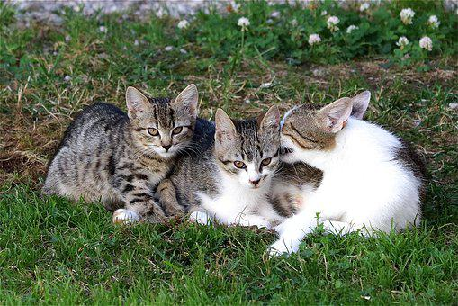 Cat, Young, Kitten, Charming, Domestic Cat, Cat Family