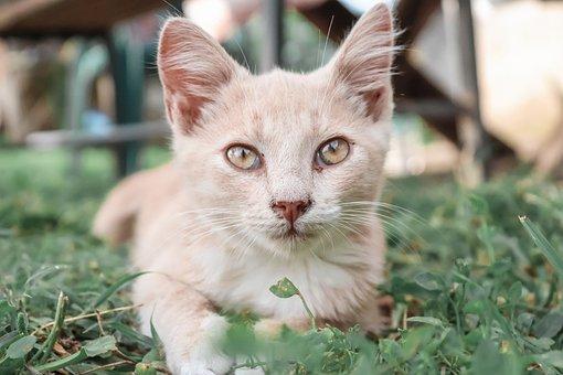 Cat, Cute, Kitten, Pet, Animal, Adorable, Portrait