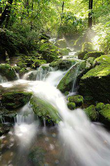 Brook, Water, Clean, Mountain, Forest, Moss, Nature