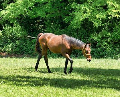 Horse, Fields, Animal, Nature, Equine, Mane, Rural