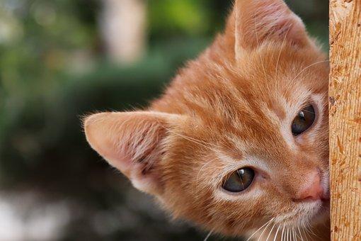 Cat, Baby Cat, Young, Kitten, Cat Baby, Sweet, Cute