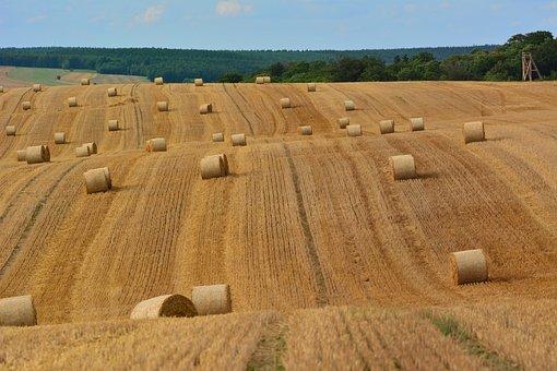 Cornfield, Harvest, Agriculture, Landscape