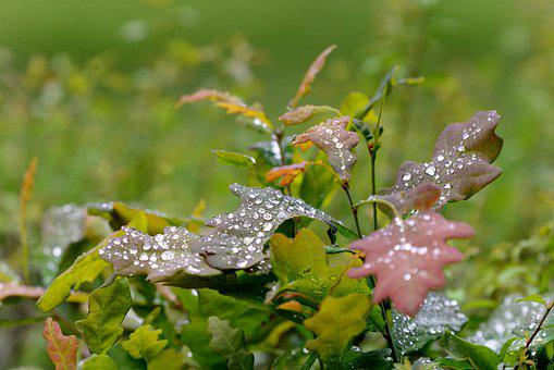Autumn Leaves, Raindrops, Autumn, Leaves, Water, Forest