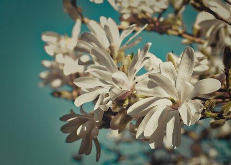 Teal And Orange, Filtered Image, Magnolia