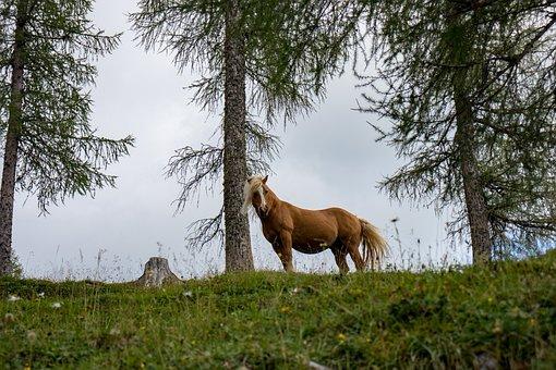 Horse, Nature, Animal, Brown, Landscape, Pasture