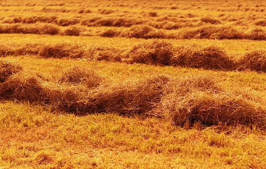 Hay, Straw, Field, Agriculture, Harvest, Nature, Rural