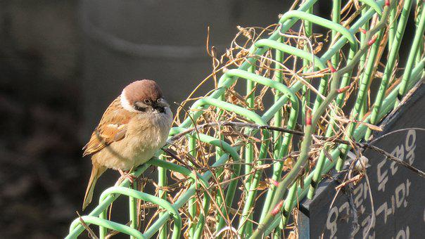 Sparrow, New, Cute, Nature, Birds