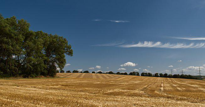 Field, Green, Gold, Blue, Sky, Clouds, Nature, Yellow