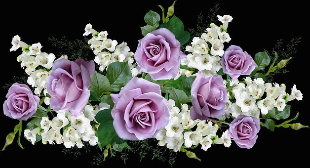 Flowers, Mauve, Roses, Fragrant, Penstemons