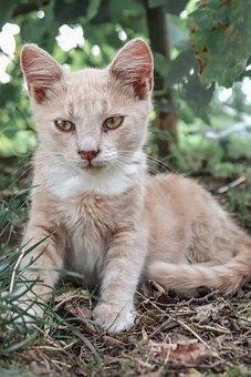 Cat, Kitten, Cute, Pet, Animal, Playful, Adorable