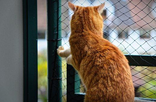 Cat, Cat Power, Security, Longing, Red, Cute, Mackerel