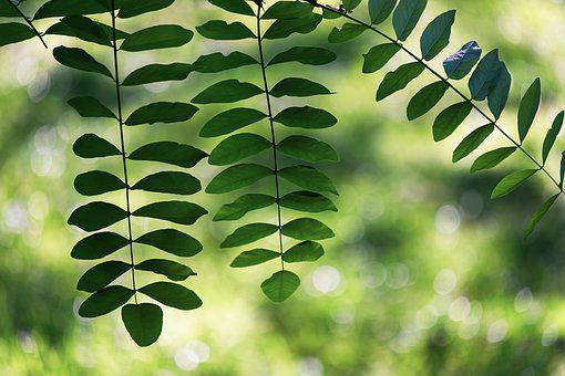 Leaves, Branch, Plant, Tree, Leaf, Green, Summer