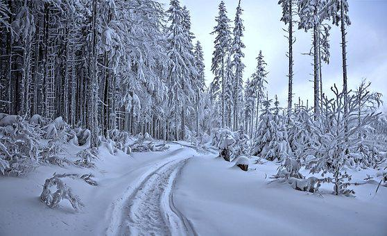 Winter, Way, Snow, Frost, Landscape, Nature, Tree
