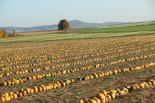 Agriculture, Pumpkin Box, Autumn, Vegetables, Arable