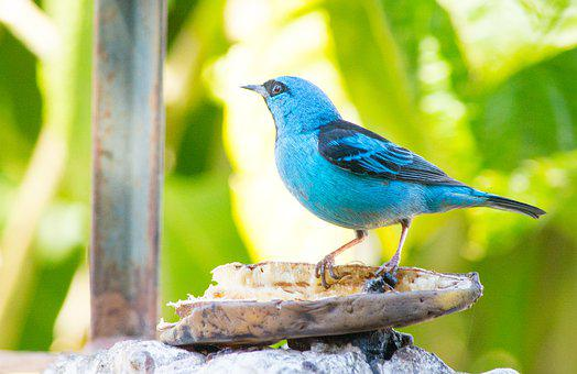 Came Out Of The Blue, Birds, Nature, Colorful Birds