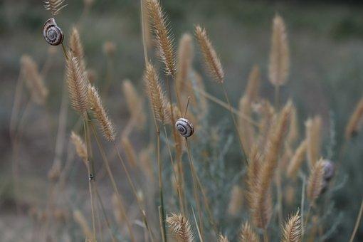 Grass, Dry, Snail, Snails, Heat, Summer, Clam, Nature