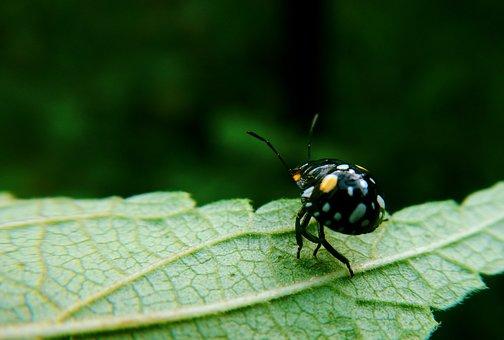 Ladybug, Coquito, Coleoptera, Nature, Insect, Bright