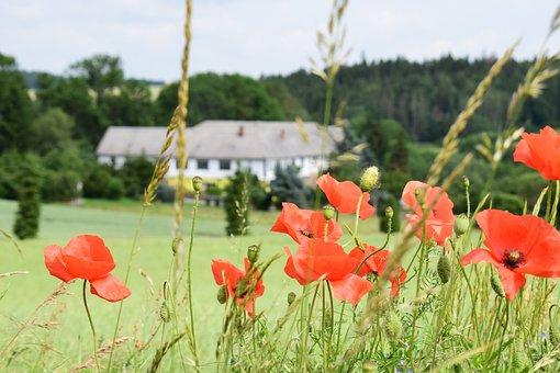 Poppies, Depth Of Field, Farmhouse, Field, Summer