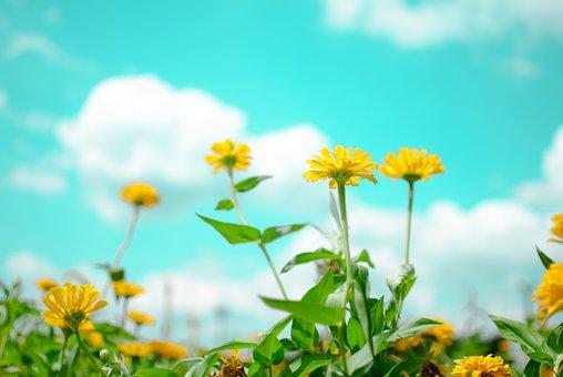 Flowers, Sky, Flowering, Nature, Plants, Cloud, Garden