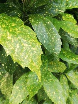 Leaf, Color, Pattern, Focus
