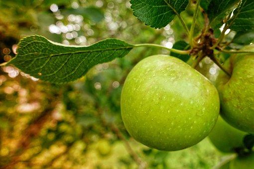 Apple Tree, Apple, Fruit, Delicious, Vitamins, Fruits