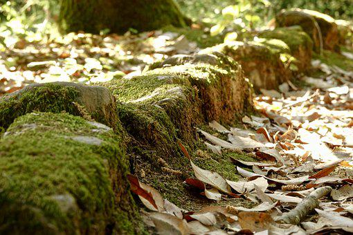 Stone, Leaves, Nature, Green, Background, Moss, Grass