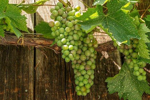 Grapes, Fruit, Green, Hanging, Grape Leaves, Vine