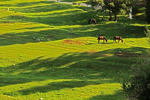 Horse, Tree, Sunlight, Grassland