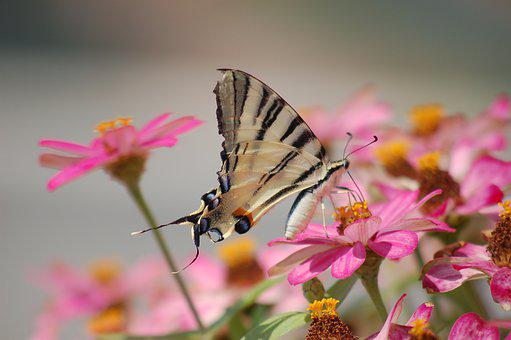 Butterfly, Butterflies, Insect, Insects