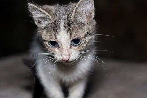 Easter Cat, Kitten, Sweet, Eyes, Pet, Ragdoll, Ester F