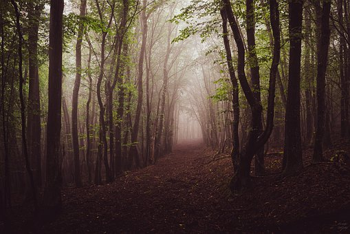 Forest, Fog, Trees, Nature, Landscape, Secret
