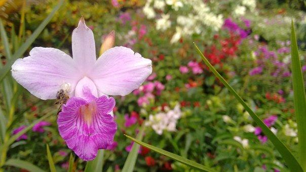 Orchid, Bee, Spider, Nursery