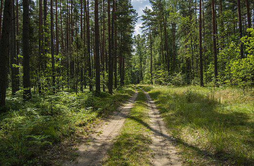 Road, Forest, Trees, Nature, Outdoors, Woods, Walking