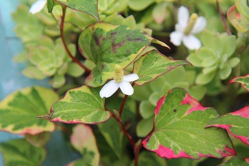 Shrub, Flowering, Nature, Garden, Flowers
