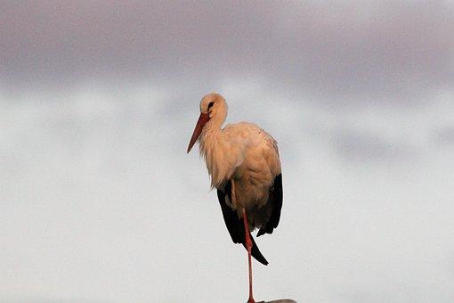Stork, Lamp, Evening, Monopod, White, Black, Bill