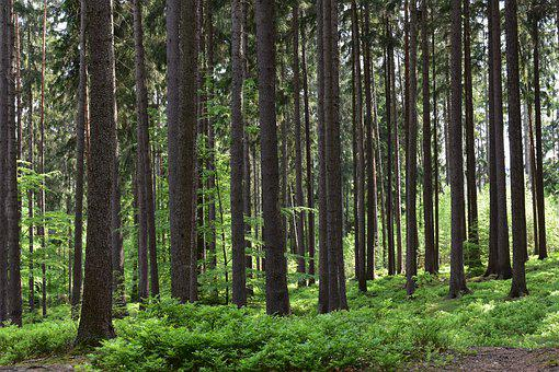 Forest, Nature, Trees, Path, Forests, The Country