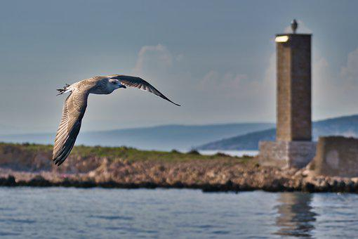 Gull, Sea, Flying, Water, Tower