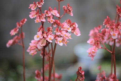 Shallow Shower, Flower, Tree