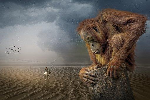 Manipulation, Monkey, Orang-utan, Animal, Sand, Beach