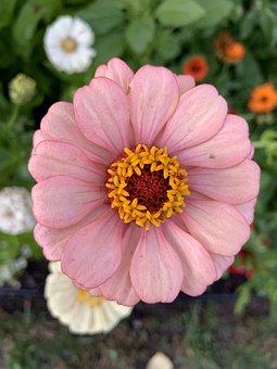 Pink, Garden, Flowers, Bloom, Blossom, Summer