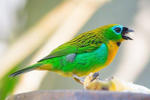 Birds, Pity, Bird, Came Out Of A Caterpillar