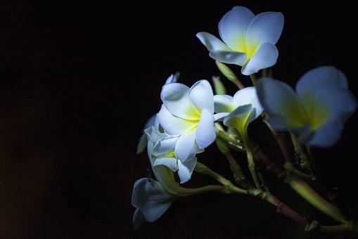 Flowers, Nature, Summer, Plant, Garden, Flora, Petals