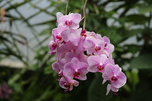 Orchid, Epiphytic Plants, Hooked, Jungle, Nature, Flora