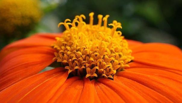 Coneflower, Blossom, Bloom, Flower, Background, Pattern