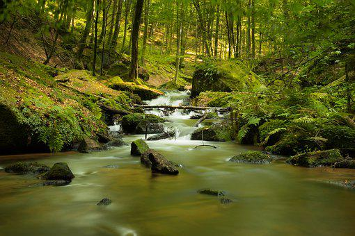 Nature, Bach, Water, Landscape, Rock, River, Forest