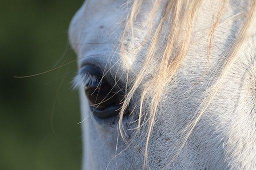 Eye, Horse, Head, Portrait, Nature, White, Pony