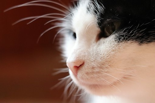 Cat, View, Pets, Animal, Kitten, Young, Kitty, Look