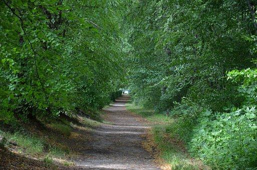 Away, Denmark, Nature, Landscape, Walk, Romance