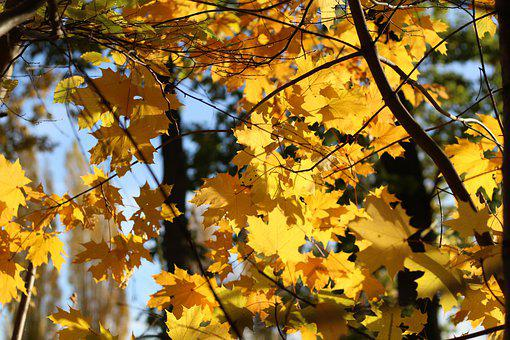 Autumn, Leaves, Nature, Foliage, Mood, Maple, Colorful