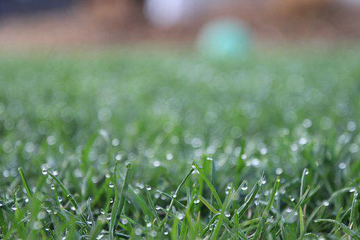 Grass, Wet, Close Up, Dew, Drop Of Water, Morgentau